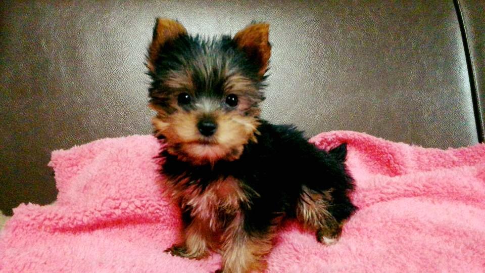 babydog2.jpg
